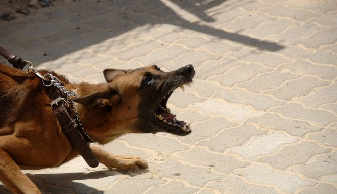 Ξάνθη: Κατέληξε η ηλικιωμένη που είχε δεχτεί επίθεση από σκυλιά