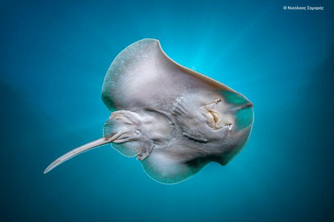 Το δίκτυο Natura 2000 προστατεύει το 20% περίπου των ελληνικών θαλασσών συμβάλλοντας στη διατήρηση μίας ζωντανής θάλασσας, που αποτελεί προϋπόθεση για τη βιώσιμη ανάπτυξη παραγωγικών δραστηριοτήτων, όπως η αλιεία και ο τουρισμός.