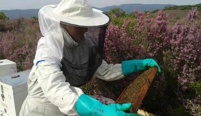 Ένα διεθνώς βραβευμένο ελληνικό μέλι