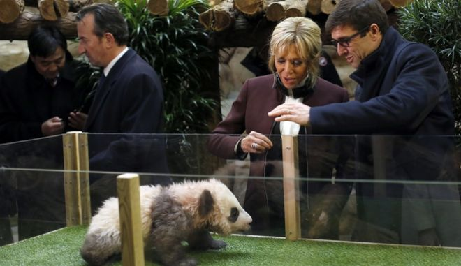 """French First lady Brigitte Macron attends a naming ceremony of the panda born at the Beauval Zoo, with Rodolphe Delord, director of the zoo, in Saint-Aignan-sur-Cher, France, Monday, Dec. 4, 2017. The 4-month-old cub is called Yuan Meng, which means """"the realization of a wish"""" or """"accomplishment of a dream."""" (AP Photo/Thibault Camus, Pool)"""