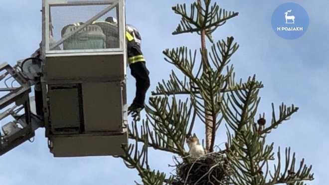 Ρόδος: Έστησαν επιχείρηση διάσωσης για γάτα που έχει εγκλωβιστεί σε δέντρο