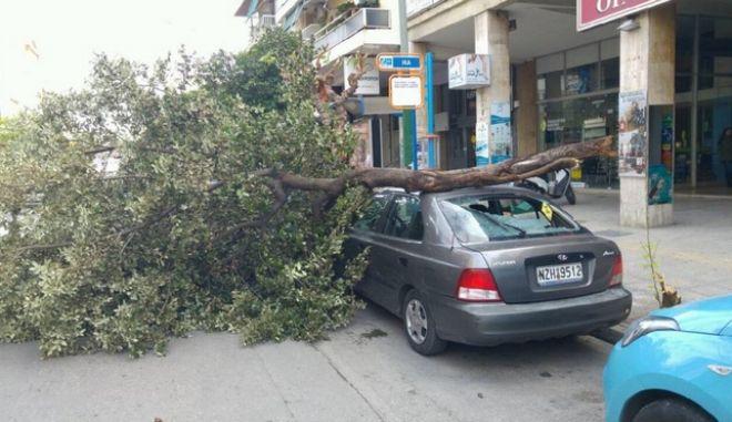 Θυελλώδεις άνεμοι πλήττουν την Αττική. 105 κλήσεις για κοπές δέντρων