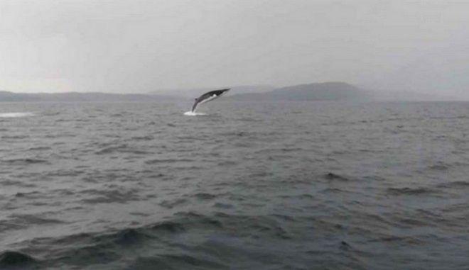 Ταξιδιώτες απαθανατίζουν φάλαινα να κάνει εντυπωσιακά άλματα στο νερό