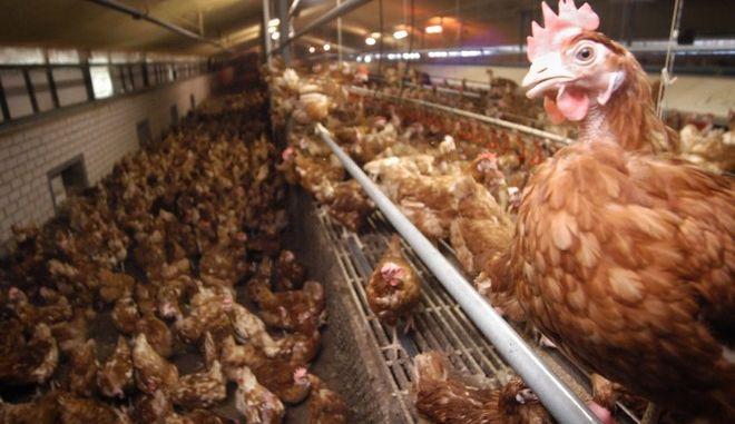 Αγρόκτημα με πτηνά στην Ολλανδία