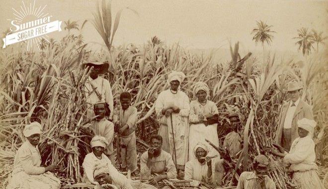 Λευκός χρυσός: Η ιστορία της ζάχαρης