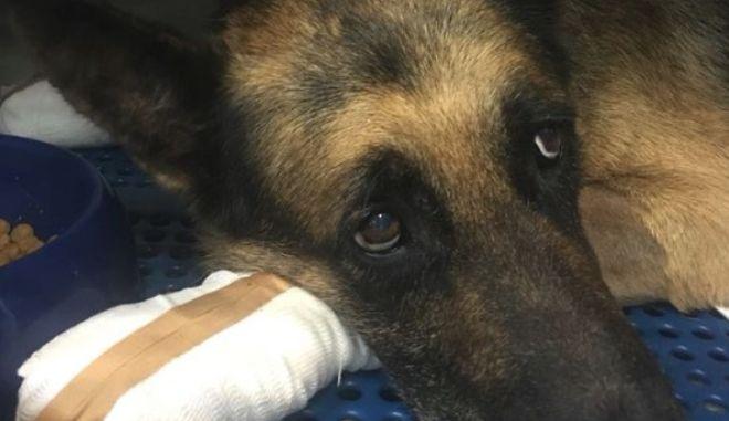 Φωτιά στο Μάτι: Ιδιοκτήτης σκύλου αρνήθηκε να πάρει το ζώο, γιατί έχει καμένες πατούσες