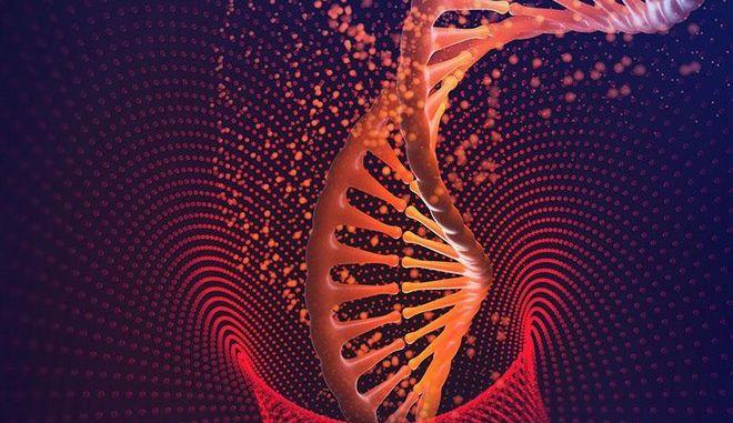 Πώς δρουν τα βλαστοκύτταρα εντός του οργανισμού