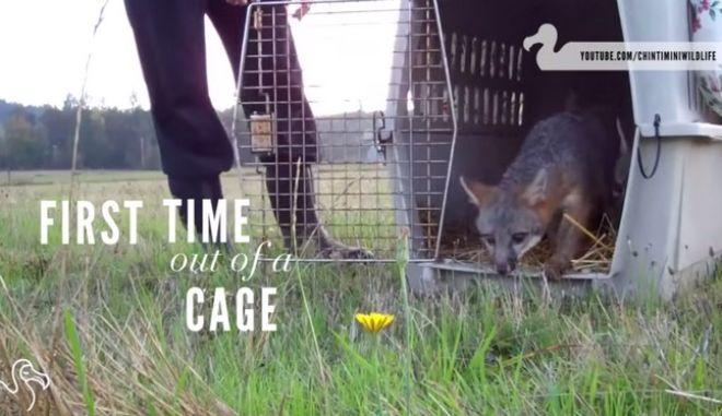 Βίντεο: Όταν τα ζώα βγαίνουν από το κλουβί. Η γεύση της ελευθερίας