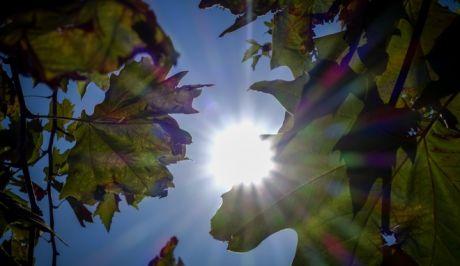 Οι ακτίνες του ήλιου περνούν μέσα από τα φύλλα ενός δέντρου σε δρόμο της Αθήνας.