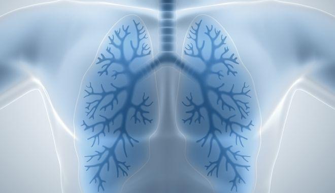 Επιστήμονες δημιούργησαν διάφανα ανθρώπινα όργανα