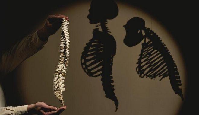 Τι ήταν αυτό που καθόρισε την εξέλιξη του ανθρώπου και της ομιλίας