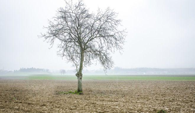 """Ένα """"γυμνό"""" δέντρο"""