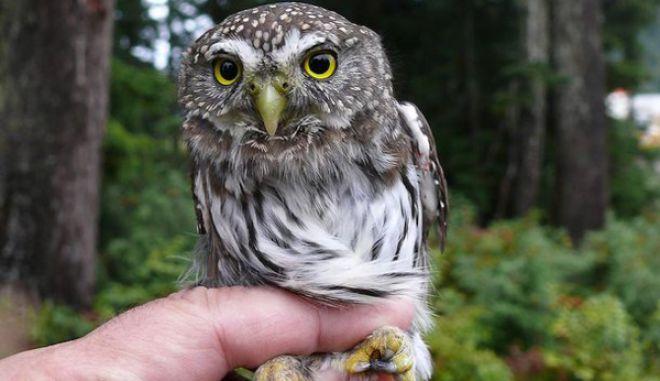 diaforetiko.gr : smallest animals19 Εκπληκτικές Φωτογραφίες: Ζώα μινιατούρες. Και όμως υπάρχουν!