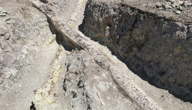 Μυτιλήνη: Δυο γιγάντιοι κορμοί απολιθωμένων κωνοφόρων δένδρων αποκαλύφθηκαν κατά τη διάρκεια ανασκαφών