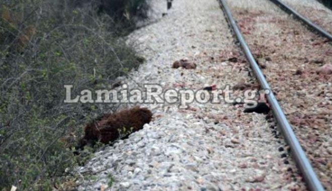 Βελεστίνο: Τρένο έπεσε τη νύχτα σε κοπάδι από αγριογούρουνα