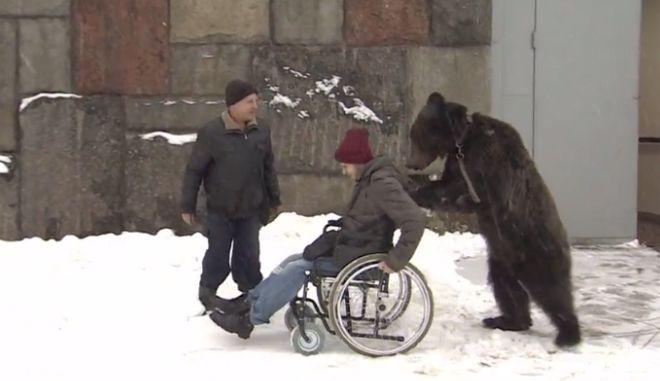 Απίστευτο βίντεο: Αρκούδα σπρώχνει τον καθηλωμένο σε καροτσάκι εκπαιδευτή της