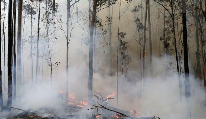 Φωτιές στην Αυστραλία