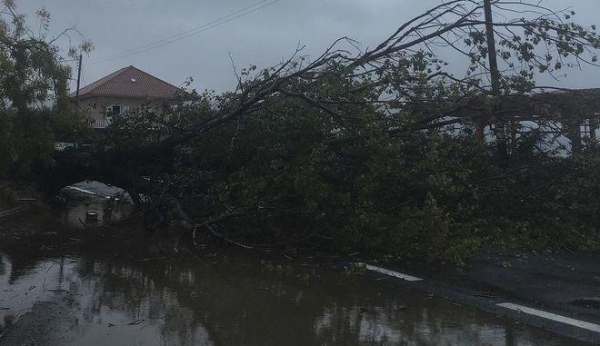 Κλειστός ο δρόμος Γιαλοβα - Πύλος λόγω πτώσης δέντρων