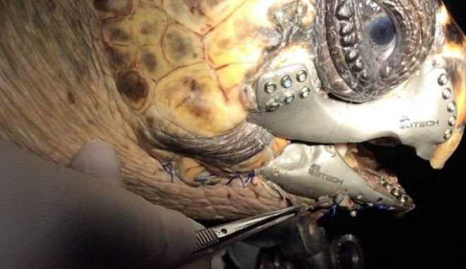 Έσωσαν χελώνα με σαγόνι 3D!