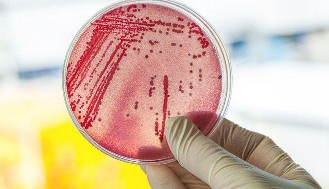 Πολύ κοντά στην ανακάλυψη νέων αντιβιοτικών για γνωστά πολυανθεκτικά βακτήρια