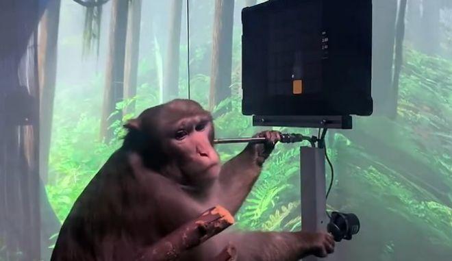 Η εταιρεία Έλον Μασκ παρουσίασε μαϊμού με ασύρματα εγκεφαλικά τσιπάκια να παίζει βιντεοπαιχνίδι