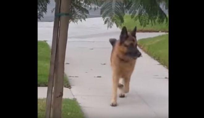 Βίντεο: Σκύλος φρικάρει νομίζοντας ότι... έχασε το αφεντικό του