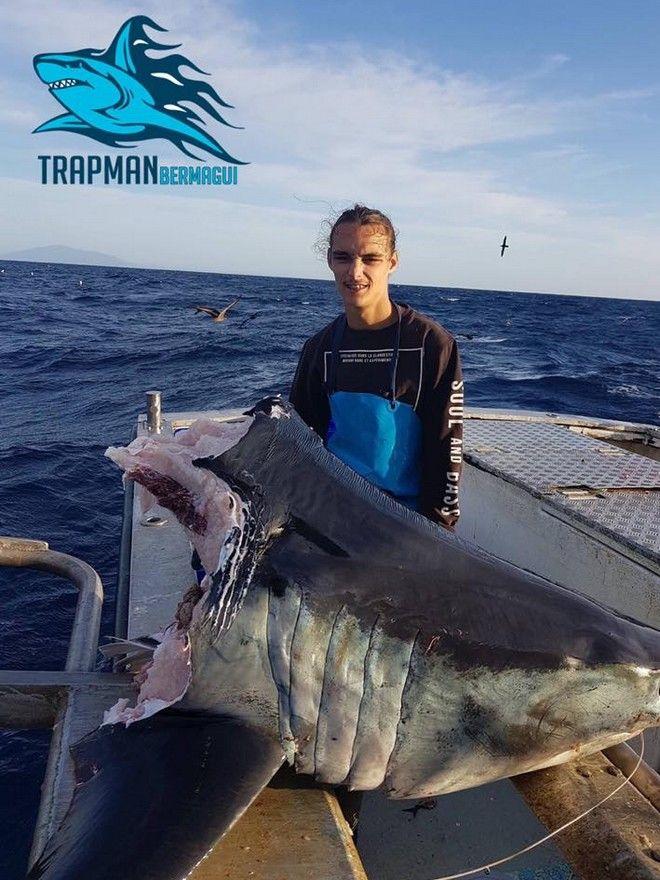 O αποκεφαλισμένος καρχαρίας