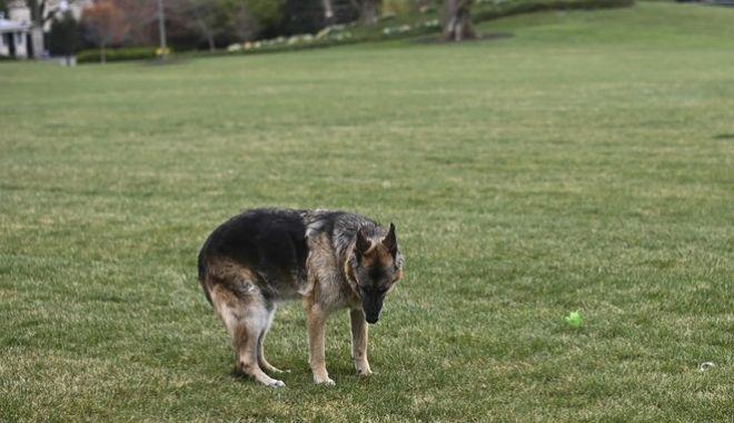 """""""Έφυγε"""" ο σκύλος του Μπάιντεν, σε ηλικία 13 ετών"""