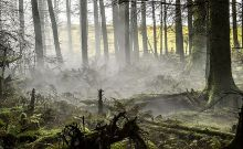 Οι ικανότητες του βρετανικού στρατού στο καμουφλάζ: Μπορείς να βρεις τον στρατιώτη;