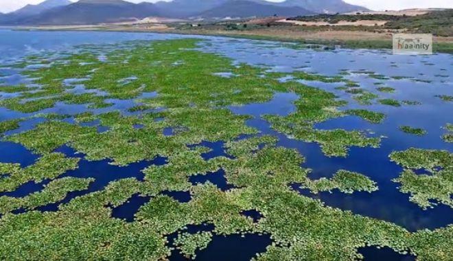 Η λίμνη με τα νούφαρα. Ταξίδι στην άγνωστη Βοιωτία
