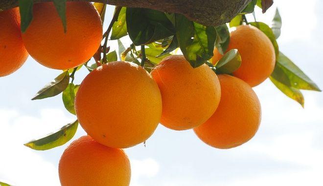 Η συνδεδεμένη ενίσχυση για τα χυμοποιήσιμα πορτοκάλια