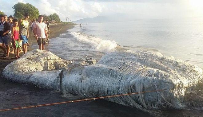 """Τρομακτικό """"μαλλιαρό"""" πλάσμα ξεβράστηκε σε ακτή των Φιλιππίνων"""