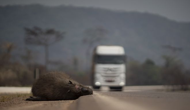Περιβαλλοντική καταστροφή στον Αμαζόνιο