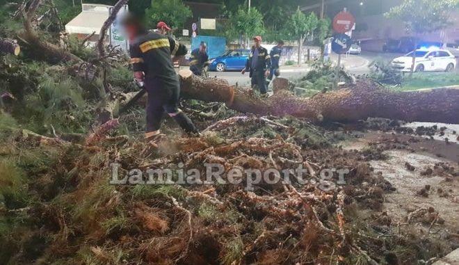 Λαμία: Τεράστιο πεύκο έπεσε μεσα στην πόλη