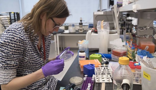 """In this Tuesday, April 25, 2017 photo, post doctoral fellow Leslie Mitchell, works at her bench at a New York University lab in the Alexandria Center for Life Sciences in New York, where researchers are attempting to create completely man-made, custom-built DNA. Mitchell says it took her a couple months to build her chromosome but longer to debug. """"The tiniest change in the code can have dramatic effect on growth, she said. We are learning new rules about how cells operate by building from scratch."""" (AP Photo/Mary Altaffer)"""