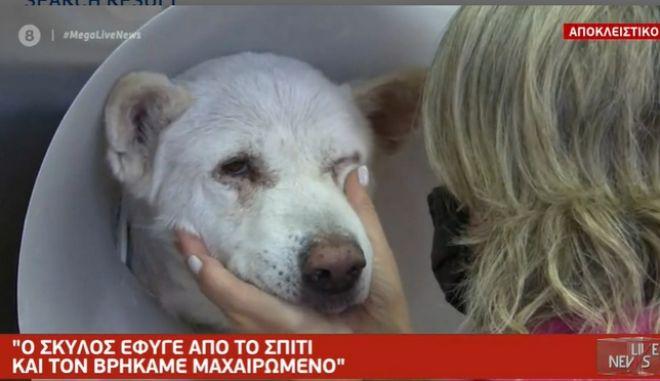 """Φρίκη στη Νίκαια: """"Ο καθηγητής μαχαίρωνε ασταμάτητα τον σκύλο"""""""