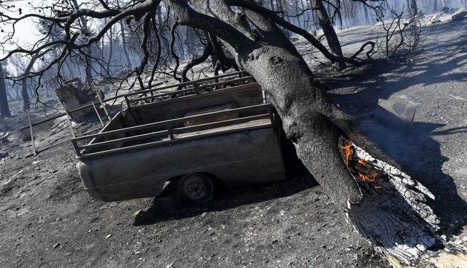 Δέντρο σιγοκαίει έξω από το χωριό Κοντοδεσπότι