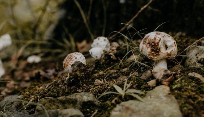 Φλώρινα: Πέθανε ο 16χρονος που κατανάλωσε δηλητηριώδη μανιτάρια