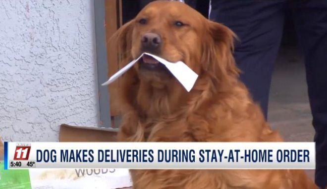 Επί το έργον: Ένα σκυλί στο Κολοράντο παραδίδει τρόφιμα στην γειτόνισσα του