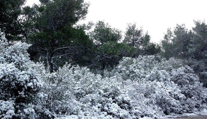 Χιονόπτωση στην Πάρνηθα την Δευτέρα 18 ιανουαρίου 2016. (EUROKINISSI/ΔΙΟΝΥΣΗΣ ΠΑΤΕΡΑΚΗΣ)