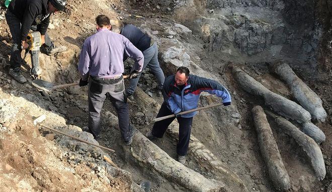 Το μυστικό των απολιθωμένων κορμών της Λέσβου