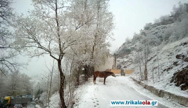 Τα πρώτα χιόνια στα Τρίκαλα