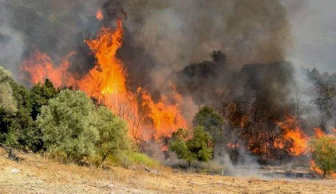 Πύργος: Οριοθετήθηκε η φωτιά στην Σμέρνα Ηλείας