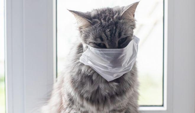 Γάτα με μάσκα