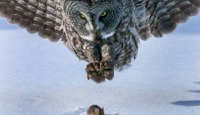 Συγκλονιστικές εικόνες: Ένας αλάνθαστος κυνηγός