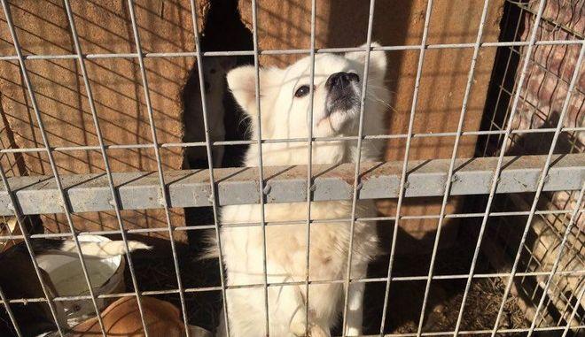 Υποσιτισμένα, άρρωστα και νεκρά τα ζώα στο κυνοκομείο Φλώρινας