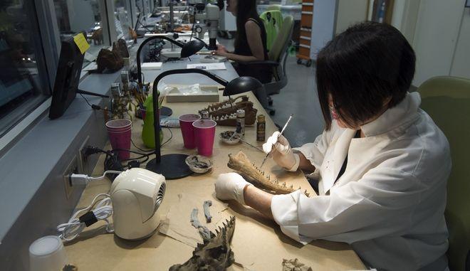 Γυναίκα παλαιοντολόγος