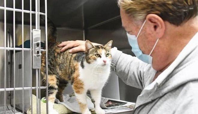 Κορονοϊός: Μεταδίδεται από άνθρωπο σε γάτα, επιβεβαιώνουν οι έρευνες