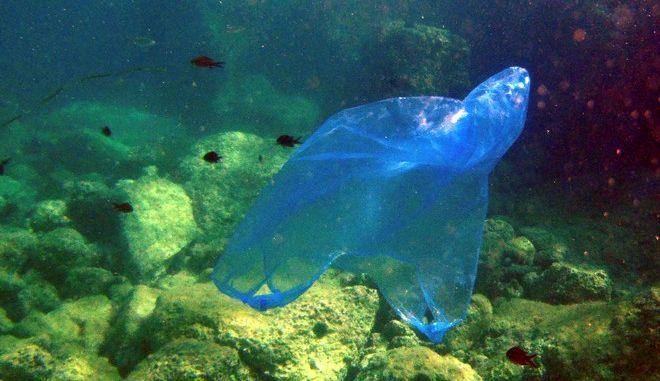 ΕΛΛΑΔΑ- Ο κόσμος του βυθού κινδυνεύει να μετατραπεί σε θαλάσσιους σκουπιδότοπους απειλώντας τα ψάρια και το θαλάσσιο περιβάλλον .(EUROKINISSI-ΓΙΩΡΓΟΣ ΚΟΝΤΑΡΙΝΗΣ)