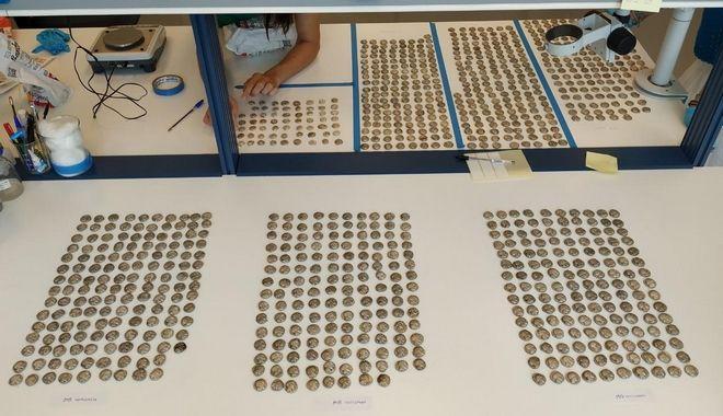 Συνελήφθη τούρκος με 1055 αρχαία νομίσματα
